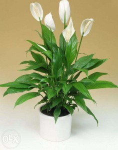 Какие растения обязательно должны быть в доме