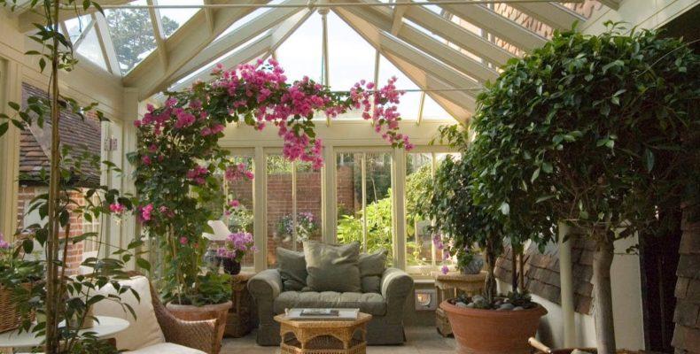 Растения для зимнего сада с умеренным микроклиматом