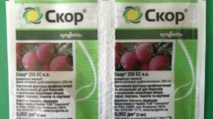 Скор инструкция по применению для плодовых деревьев: профилактика и лечение