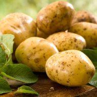 Как посадить ранний картофель?