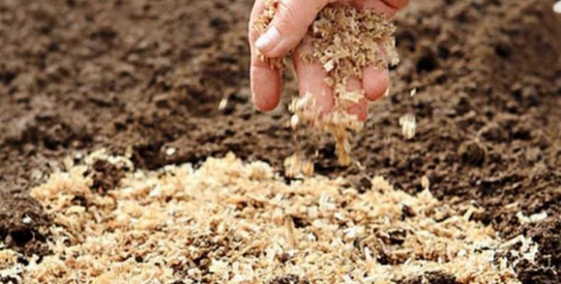 Древесные опилки – доступная органика