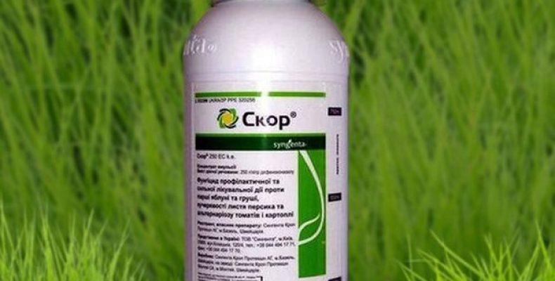 Препарат СКОР для обработки растений