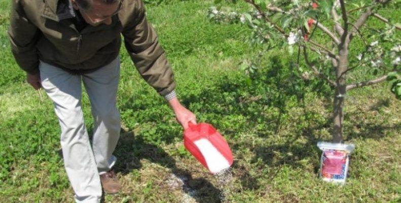 Подкормка плодовых деревьев после цветения весной