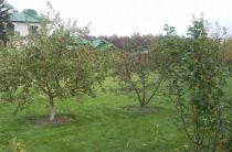 Как правильно заложить сад на участке?