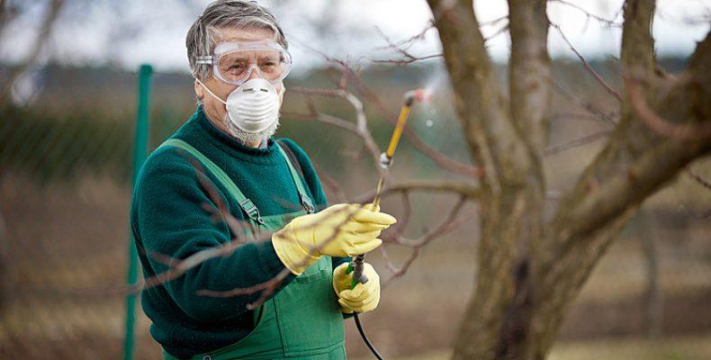 Обработка растений весной от болезней и вредителей.