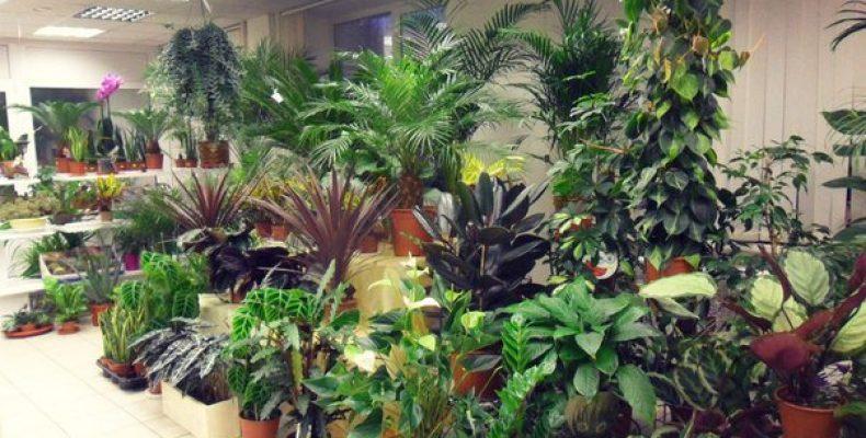 Какие растения обязательно должны быть в доме?