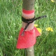 Как сделать ловчие пояса своими руками? Защита от вредителей