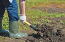 Почва для посадки огурцов в открытом грунте. Как подготовить её для посадки?