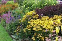 Миксбордер – это живописный цветник